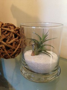 Air Plant in Glass with White Sand by 3GreenGals on Etsy, $15.00