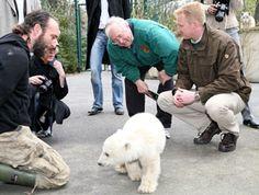 Knut (polar bear) - Wikipedia, the free encyclopedia