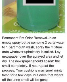 Remove pet odor