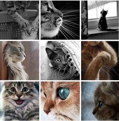 Cats, Animals, Creative, Gatos, Animales, Animaux, Animal, Cat, Animais