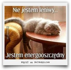 The Truth About Homemade Energy Saving Systems Cool Pets, Cute Cats And Dogs, Animals And Pets, Funny Animals, Cute Animals, Wtf Funny, Funny Cute, Polish Memes, Weekend Humor