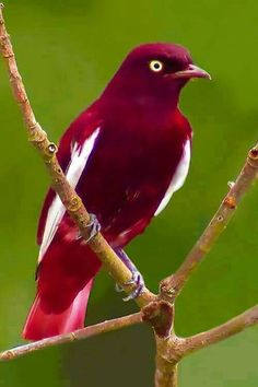 What a beautiful red bird