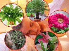 Rośliny doniczkowe oczyszczające powietrze w mieszkaniu