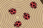 Uğur Böceği   - http://hayvan.oyunlari.net