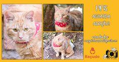 Adote, Não Compre!: Fifis - gato amarelo para adoção especial em Porto Alegre