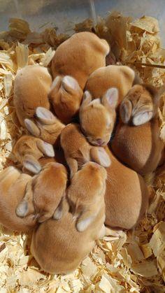 Bunny beans - Album on Imgur