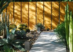 1000 images about desert garden on pinterest