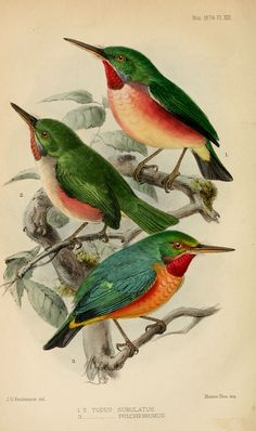 Explore BioDivLibrary's photos on Flickr. BioDivLibrary has uploaded 108301 photos to Flickr.