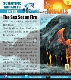 """[from """"Scientific Miracles in the Oceans Animals"""" by """"Yusuf Al-Hajj Ahmad"""", published by Darussalam, 2010]"""