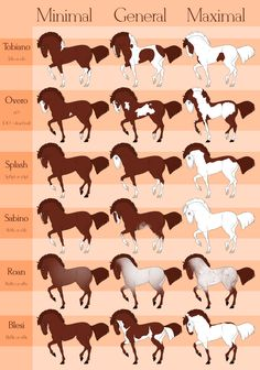 Beaurever white patterns by Wouv Beaurever white patterns by Wouv - Art Of Equitation Cute Horses, Pretty Horses, Beautiful Horses, Animals And Pets, Funny Animals, Cute Animals, Horse Color Chart, Arte Equina, Horse Coat Colors