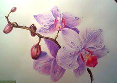 Как нарисовать орхидеи цветными карандашами.
