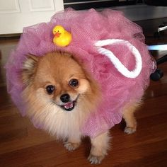 This is the cutest list of costumes for dogs we have ever seen! We are fans of all the adorable pups in their costumes! Cute Dog Costumes, Puppy Costume, Pet Halloween Costumes, Animal Costumes, Pet Costumes For Dogs, Costume Ideas, Costumes For Rabbits, Easy Halloween, Chihuahua Costumes