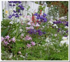 I absolutely love Tracie's garden as it bursts into color and springs back to life! Fishtail Cottage