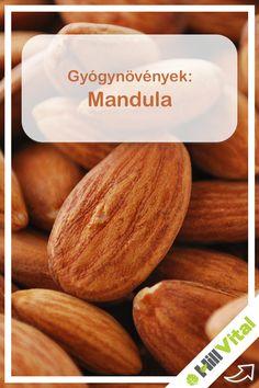 A mandula nagyon egészséges. Sok fehérjét és értékes aminosavakat tartalmaz. Ezenkívül gazdag növényi rostokban, telített és telítetlen zsírsavakban. De B-vitaminokat is bőven tartalmaz (B1-, B2- és B6-vitamin), valamint E-vitamint. Ez utóbbi megakadályozza a véredényekben a lerakódást. A mandula bővelkedik ásványi anyagokban is: kálium, kalcium, magnézium és foszfor. Nyomelemek közül megtalálható benne a vas, a mangán és a cink. Health 2020, Superfoods, Almond, Herbs, Healthy, Super Foods, Almonds, Herb, Spice