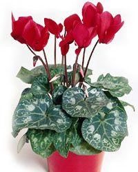 Garden Plants, Indoor Plants, Trees To Plant, Gardening, Vases, Flowers, Violets, Inside Plants, Tree Planting