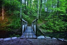 / Path to the magic forest by Maja Lampe Experimental Music, Magic Forest, Earthship, Life Is Beautiful, Beautiful Things, Growing Tree, Disneyland, Paths, Canada