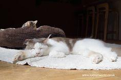 Cat Travel: Neko no Jikan Amemura  Osaka Cat Cafe Part 3 Cat Cafe Japan #katzenworld ねこ cat cats cute 猫 猫の時間アメリカ村店 funny ネコ katze katzen kawaii