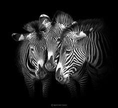 Beauty of animals..