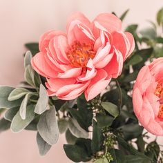The Coral Charm Peony Paper Flower Guide