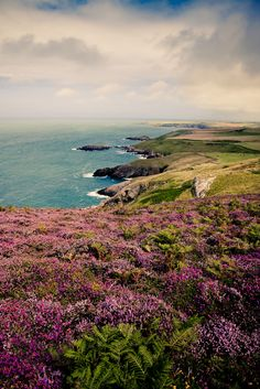 wanderthewood: View to Whispering Sands, Wales by DuncanTyson on Flickr