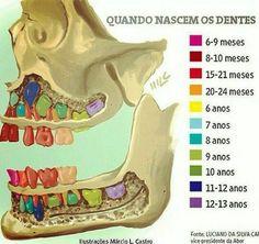 Erupção dos dentes