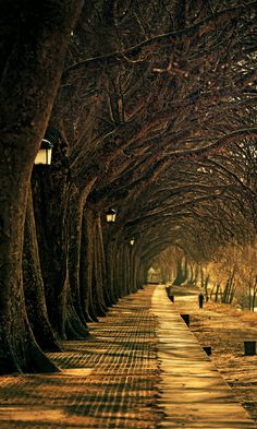 Lantern Walk.. Ponte de Lima, Portugal.