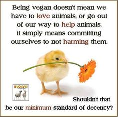 We can talk about love later. Vegan V, Why Vegan, Vegan Foods, Reasons To Be Vegan, Vegan Society, Talk About Love, Vegan Quotes, Vegan News, Make A Choice