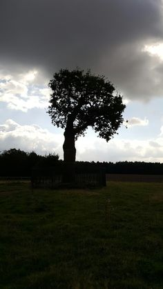 Boscobels Royal Oak , Richard II hiding place. Richard Ii, Hiding Places, Royal Oak, Celestial, Sunset, Outdoor, Hiding Spots, Outdoors, Sunsets