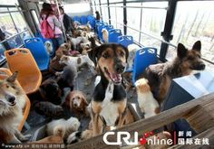 Chinese dogs going home instead of to a slaughterhouse. God bless all the brave & kind hearted Chinese...Collie! I see a Collie! @rejuvapet  Embedded image permalink
