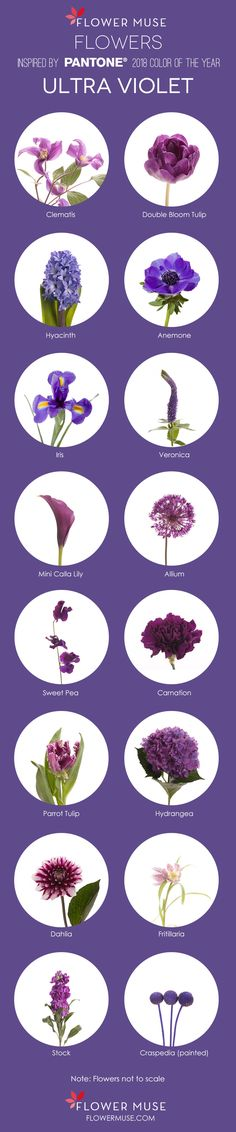 2018 Pantone Color of the Year: Ultra Violet – Flower Inspiration on Flower Muse blog