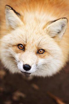 Fox Village by Lauren Elizabeth Pirie Bath