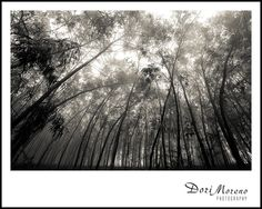 Eerie forest in Ixopo, South Africa Misty Day, Forests, South Africa, Southern, Plants, Art, Art Background, Woodland Forest, Kunst