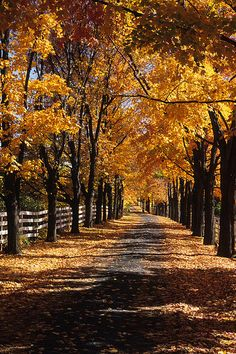 This is my dream... A tree lined driveway leading to a beautiful field stone house sitting on a lake