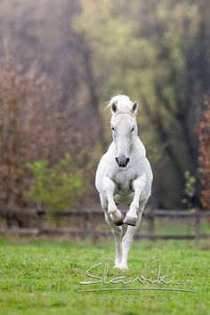 Horse like a ballerina!