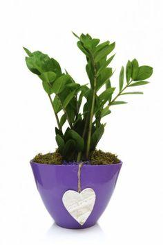 τον πόθο μπορω να τον βαλω στον μπανιο σε ενα γλαστρακι σαν αυτο της φωτογραφιας του Gardening Tips, Planter Pots, Flora, Beauty, Decoration, Plants, Decor, Decorations, Decorating