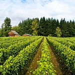 Culinary Tour of Willamette Valley