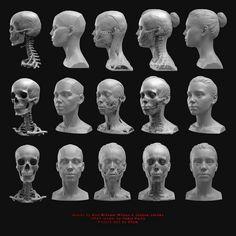 опорные точки головы рисунок: 7 тыс изображений найдено в Яндекс.Картинках Facial Anatomy, Skull Anatomy, Head Anatomy, Human Anatomy Drawing, Human Body Anatomy, Anatomy Poses, Anatomy Art, Human Sculpture, Sculpture Head