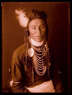 Harry Don't Mix (the son of Don't Mix) - Crow - 1905