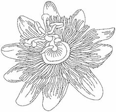 "Passion Fruit Flower (from Pen & Ink Flowers) Perfect for combining with inks, paint, or colored pencils. Use it with the outline only version for ""shadow appliqué.""   #machineembroidery #flower #redwork #floral"