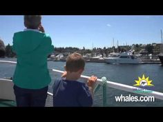Our Deluxe Whale Watching Cruise includes a tour of the San Juan Islands, a free salmon lunch, and a stop in Friday Harbor. Whale Watching Cruise, Whale Watching Season, San Juan Islands, Cruises, Vancouver, Salmon, Road Trip, Friday, Lunch