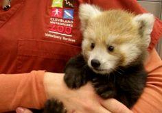 Képeken minden idők 10 legcukibb állata | femina.hu