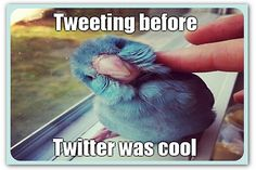 8 Twitter essentials for PR | Articles | Home