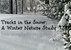 Don't let cold weather stop you from enjoying a winter nature study! Check out the backyard tracks we found in the snow and the resources you can use for fun!