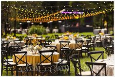 Daily Pretty:  150 yards of 50' strands of Italian Party Lights illuminate the casual dinner & concert grove. Linens in tones of yellow and grey with coordinating flowers and black wood cross back chairs. Image by Damion Hamilton