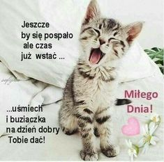 funpot: Guten Morgen von Renilinz - Pin to Pin Good Morning Good Night, Good Morning Wishes, Good Morning Quotes, Animals And Pets, Funny Animals, Funny Images, Funny Pictures, Survival Blanket, Papa Francisco
