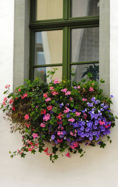 Window box, Sachsen, Germany by harry eppink