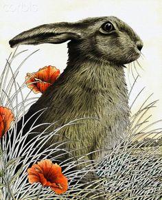 Hare - Alan Baker