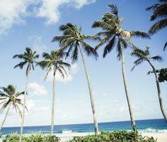 Beach :: Palms :: Sand :: Paradise :: Waves