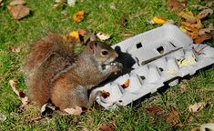 Find out what your squirrels like to eat! #DIY Egg Carton Squirrel Buffet - PetDIYs.com