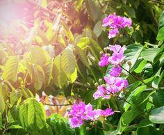 Beautiful Pink Flowers In The Sunshine Photograph by Nadezhda Tikhaia #NadezhdaTikhaiaFineArtPhotography #ArtForHome #HomeDecor #Flowers #Pink #Green #InteriorDesign #FineArtPrints